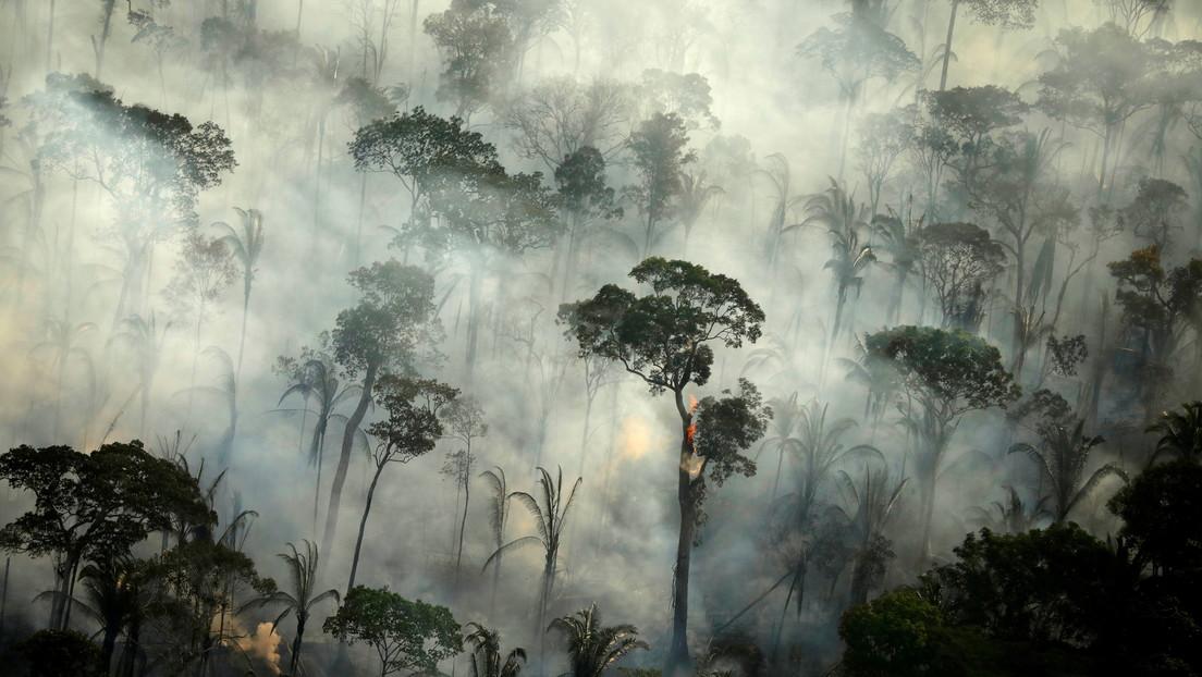 La selva amazónica emitió más dióxido de carbono del que absorbió en la última década