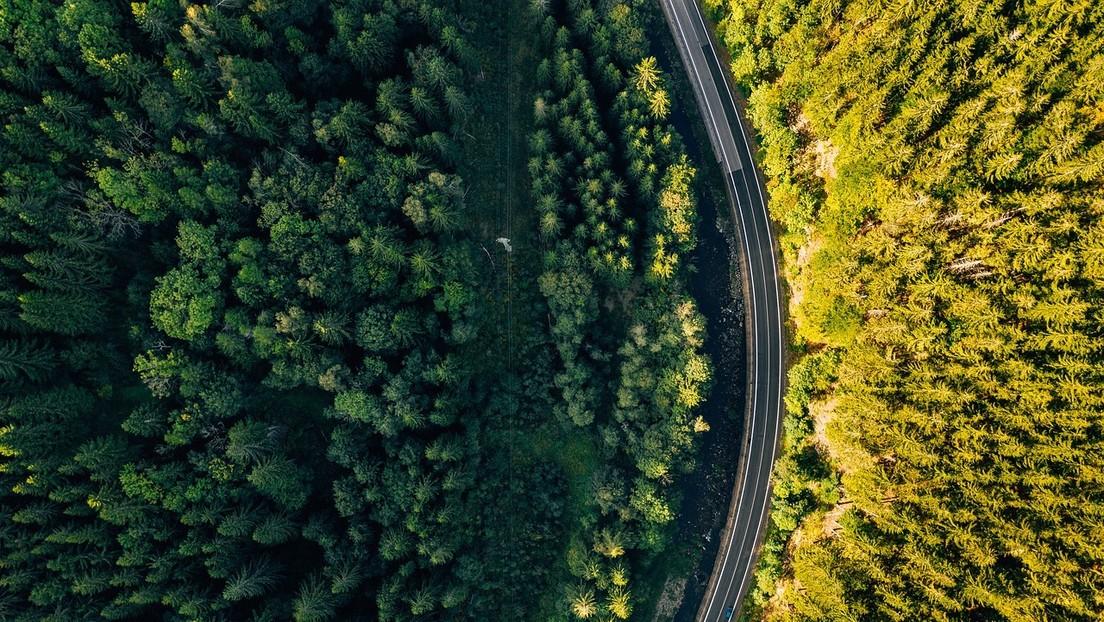 Descubren que plantar árboles 'atrae' más lluvia en verano: ¿el mejor remedio contra el cambio climático?