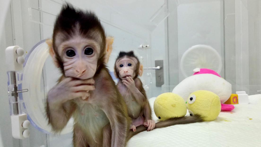 Síntomas, tratamiento, mortalidad: ¿Qué se sabe sobre el virus B del mono que se contrae por la picadura de un macaco?