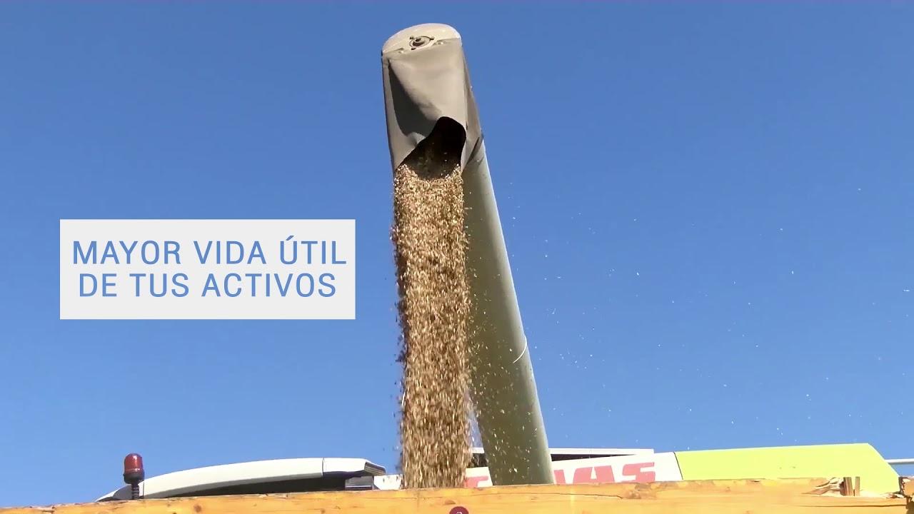 El campo argentino se transforma, hace el & quot;  las vacas hablan & quot;  y promete nuevos dólares para la economía